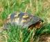 turtle2b